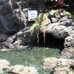 Waikiki Aquarium Outdoor Lagoon