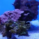 Mixed Reef Tank at Waikiki Aquarium.
