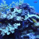 Waikiki Aquarium Reef Display
