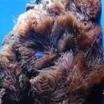 Clownfish and Anemone Display Aquarium