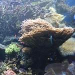 Massive SPS Display Aquarium