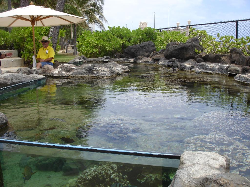 Outdoor aquarium with tangs and butterfly fish for Outdoor fish tank pond