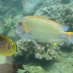 Outdoor Aquarium with Tangs and Butterfly Fish