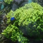 Outdoor Display Mixed Reef Aquarium