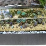 Outdoor Display Aquarium with Tridacna Clams