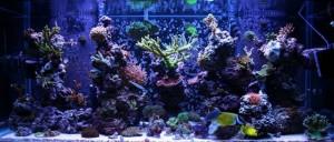Bare Bottom SPS Dominated Aquarium