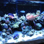 180 Gallon Reef Aquarium
