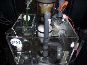 Precision Marine Sump with Protein Skimmer