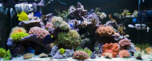 48 Gallon Mixed Reef Aquarium