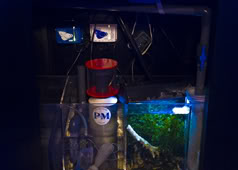 PM Redline Skimmer and EcoTech Vortech Pumps