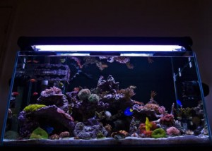 48-Gallon Mixed Reef Aquarium