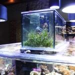 Fish Gallery Showroom