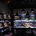 Fish Gallery Showroom