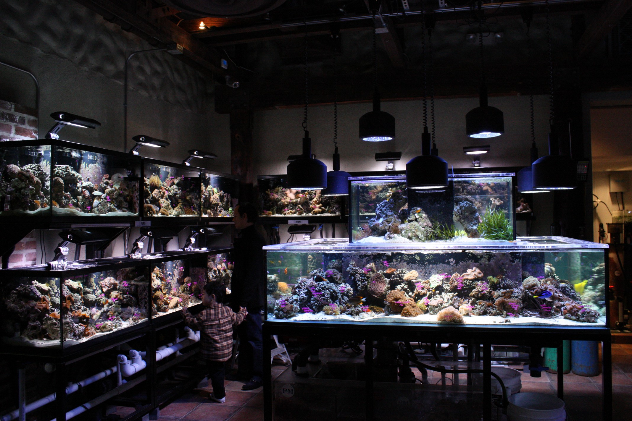 Local fish store mixes alcohol and aquariums aquanerd for Tropical fish shop