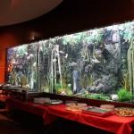 Massive Freshwater Display Aquarium