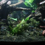 Freshwater Planted Display Aquarium