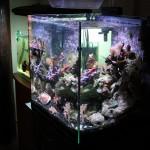 Current USA Solana Reef Aquarium