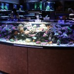 Bowfront Glass Display Aquarium