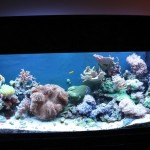Mixed Reef Aquarium Full Tank Shot
