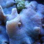 Purple Mushroom Closeup