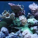 Mixed Reef Aquarium