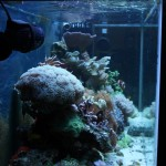 Left Side of Mixed Reef Aquarium