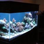 Angled Full Tank Shot of Reef Aquarium
