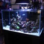 Oceanic Illuminata Rimless Reef Aquarium