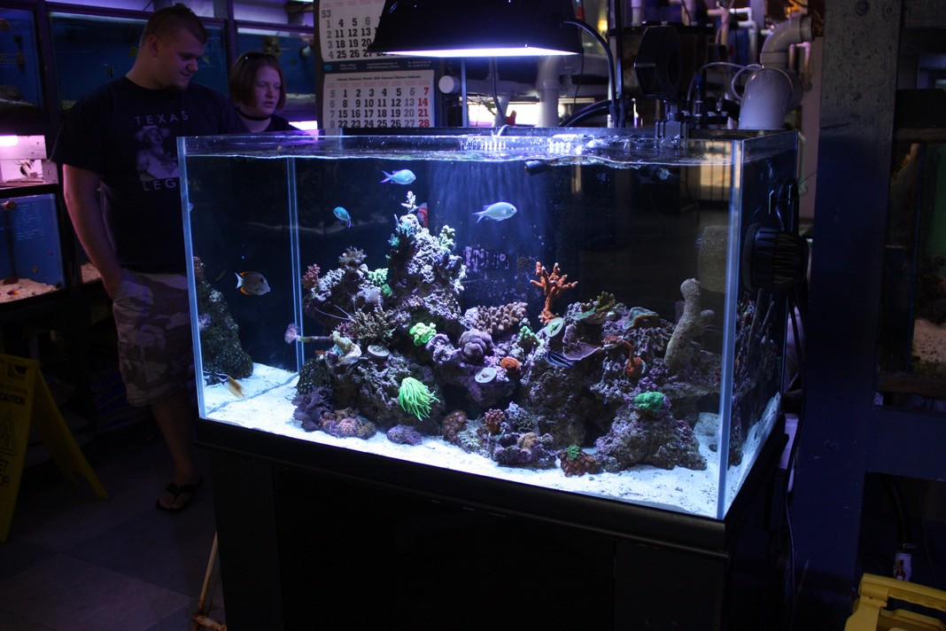 Aqueon 65 Gallon Aquarium 1000 Aquarium Ideas