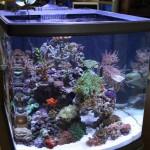 Mixed Nano Reef Aquarium
