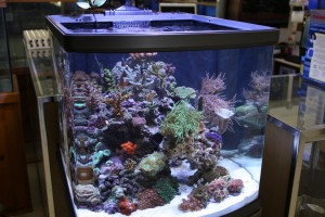 Mixed Nano Reef Aquarium
