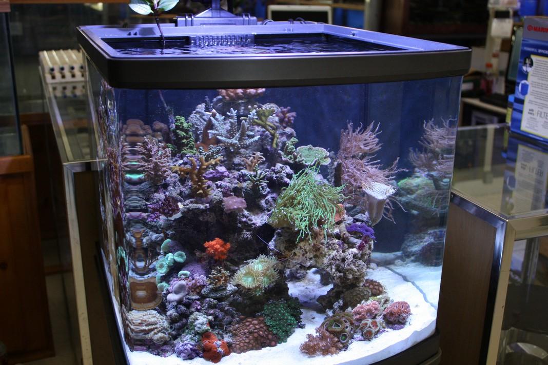 Image gallery nano marine aquarium for Aquarium nano marin