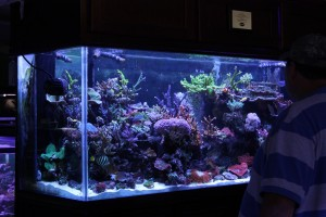 SPS Dominated Display Reef Aquarium