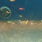 Dead Fish and Excess Fish Food in Walmart Aquariums