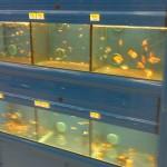 Walmart Aquariums Freshwater Aquariums