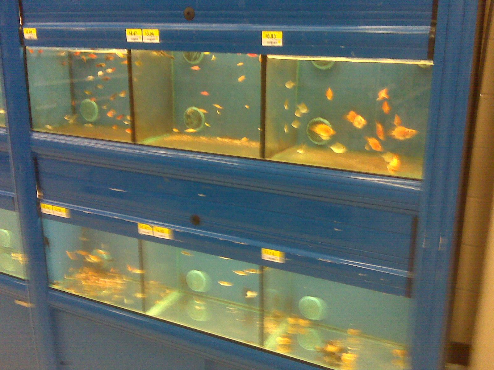 Walmart and Their Fish Tanks | AquaNerd