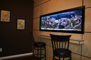 180 Gallon In-Wall Reef Aquarium