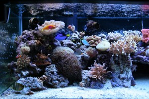 180 Gallon Mixed Reef Aquarium