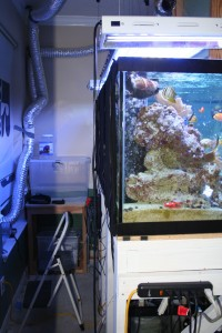 Rear View of 180 Gallon Reef Tank
