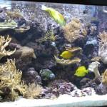 Mixed Reef at the Georgia Aquarium