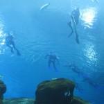 SCUBA Diving at the Georgia Aquarium