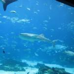 Whale Shark Exhibit