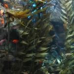 Kelp Exhibit at the Georgia Aquarium