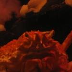 Crab Closeup at the Georgia Aquarium