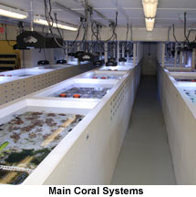 Drs. Foster and Smith Aquaculture Facility Coral System