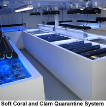 LiveAquaria Soft Coral and Clam Quarantine