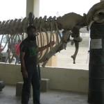 Fin Whale Skeleton