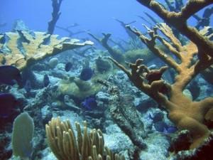 NOAA Coral Reef Image