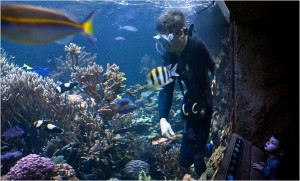 large public reef aquarium