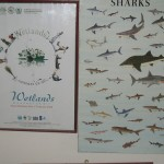 WWF Shark Posters